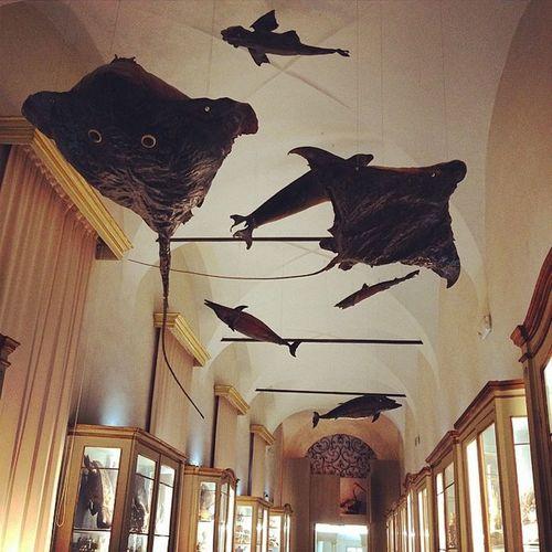 I pesci volanti di Lazzaro Spallanzani #reggionarra #reggioemilia #museicivici #lifeisbeautiful #lifelessordinary