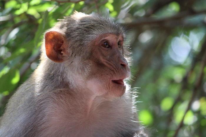 Animals Animalposing Monkey Monkeybusiness  Animallover