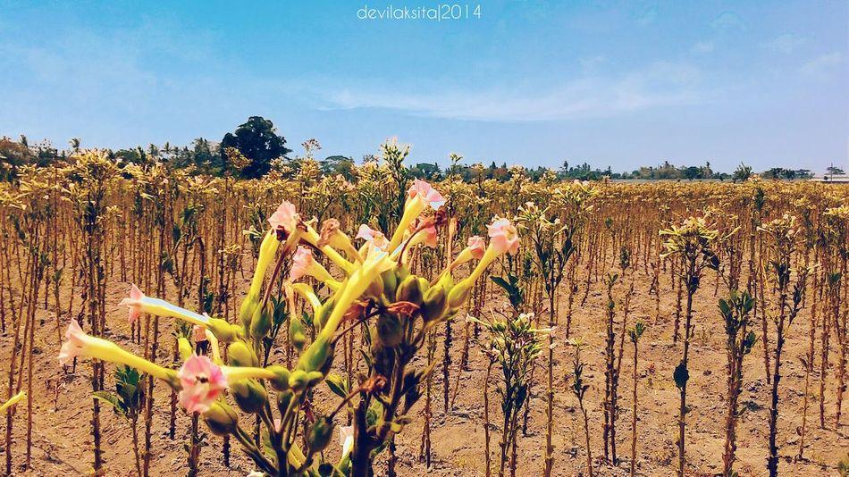 Wonderful Indonesia Flowers,Plants & Garden Explorejogja Kamerahpgue