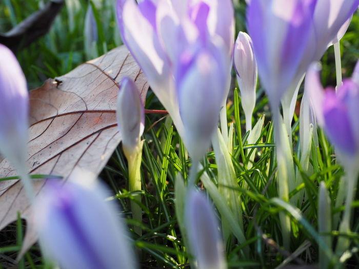 Park Springtime