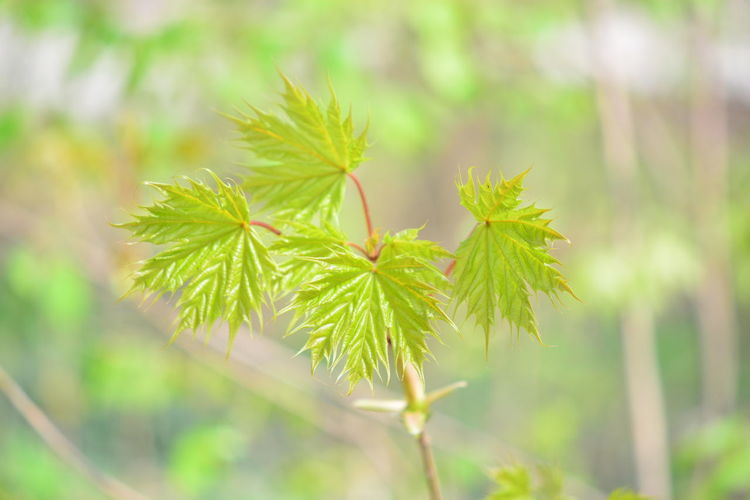 Plant Leaf Plant Part Green Color No People Close-up Nature Growth Beauty In Nature Tree Day Outdoors Focus On Foreground Selective Focus Freshness Land Forest Environment Tranquility Medicine Herb