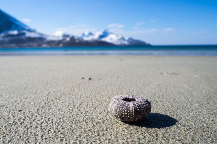 Sea urchin at sandy beach against sky