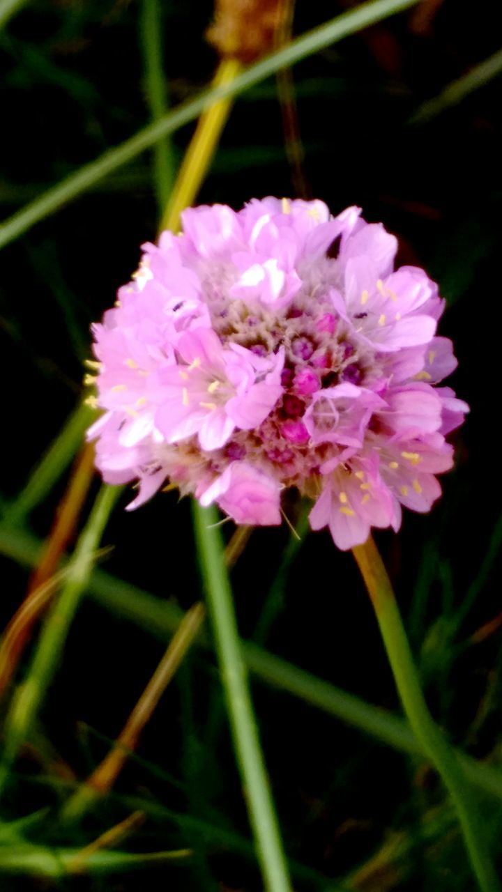 flower, growth, petal, fragility, nature, beauty in nature, plant, no people, close-up, blooming, outdoors, freshness, flower head, day