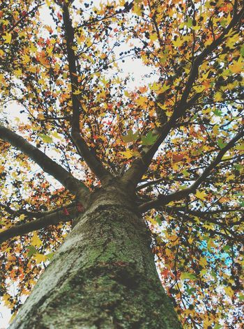 Arbre Tree Nature Low Angle View Beauty In Nature Personal Perspective Fulles Autumn🍁🍁🍁 Nature Strange Forms Of Nature Leavesporn Leaves🌿 Green Color Leaves 🍁 Tardor/Autumn Leaves_collection Nature_perfection Beauty In Nature Flowers, Nature And Beauty Tree_collection  Tree Silhouette Tree Tree And Sky Naturelovers