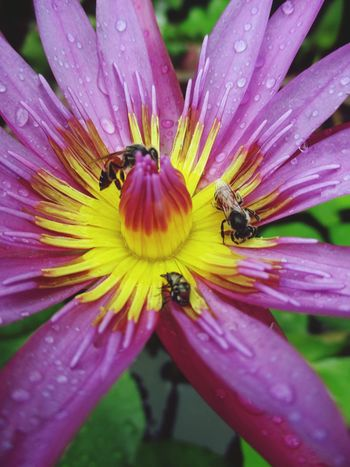 Nature Animal Themes Flower Beauty In Nature One Animal Animals In The Wild Insect Fragility Petal Plant Growth Freshness No People Outdoors Flower Head Day Animal Wildlife Pollen Close-up Pollination บัว Samutprakarn In Thailand