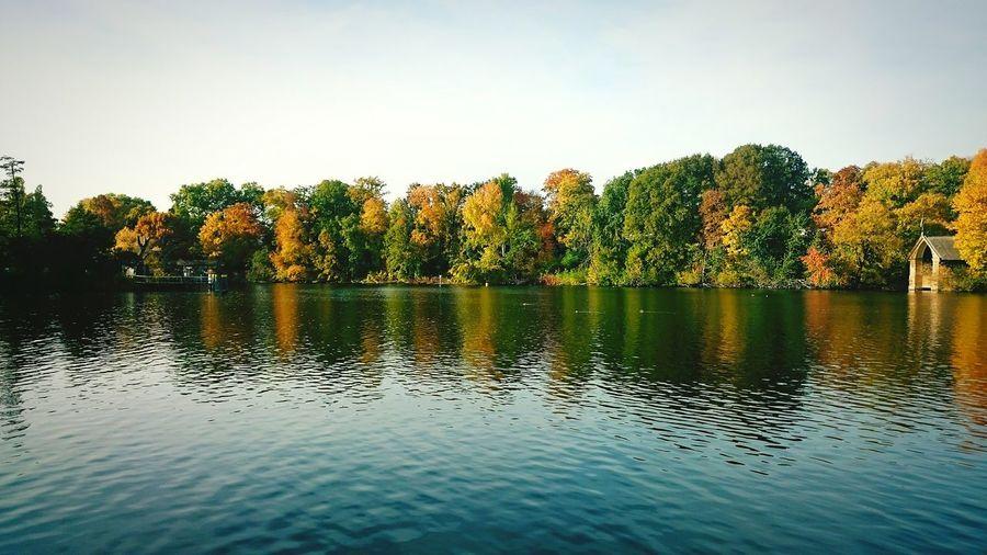 Dutch Autumn Landscape