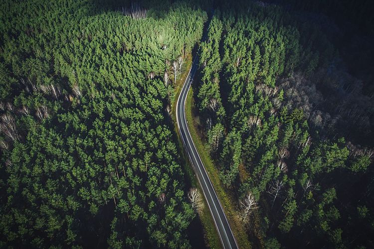 Aerial View Of A Road In Forest