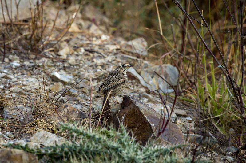 Bird perching on a field