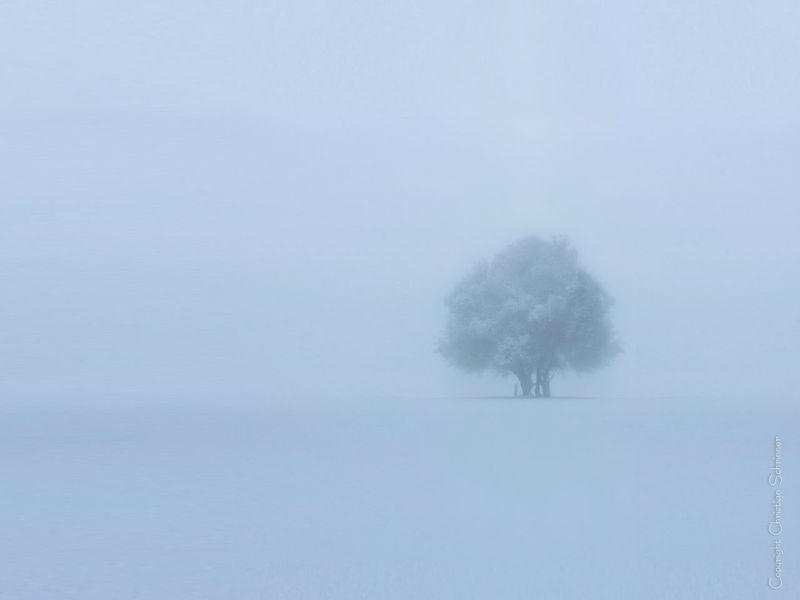 Foggy winter landscape. Winter Landscape Landscape Foggy