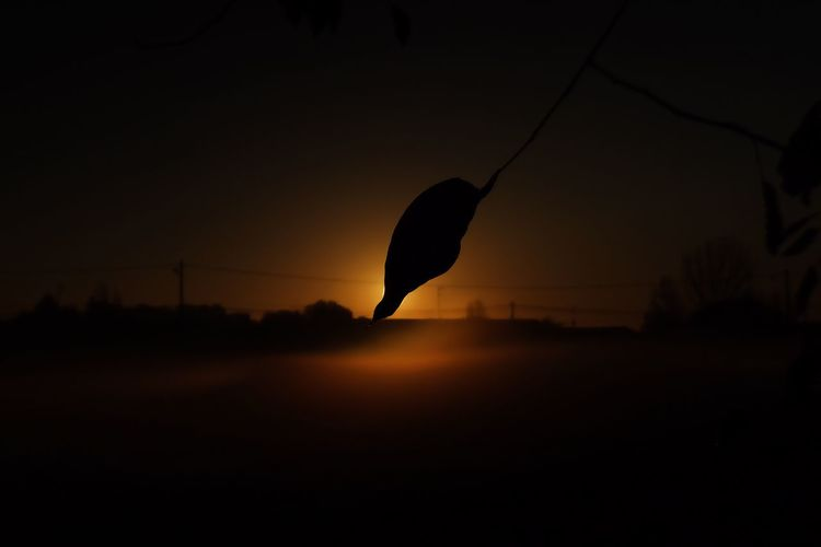 🍂🌞 Sunset Silhouette Tree Beauty In Nature Nature Scenics Tranquil Scene Sky Tranquility Outdoors No People Landscape Animal Themes Day EyeEmNewHere EyeEm Best Shots EyeEm Masterclass EyeEmBestPics Eye4photography  Best EyeEm Shot Eyeemphotography Sunrise Sunset_collection Autumn Colors Fog