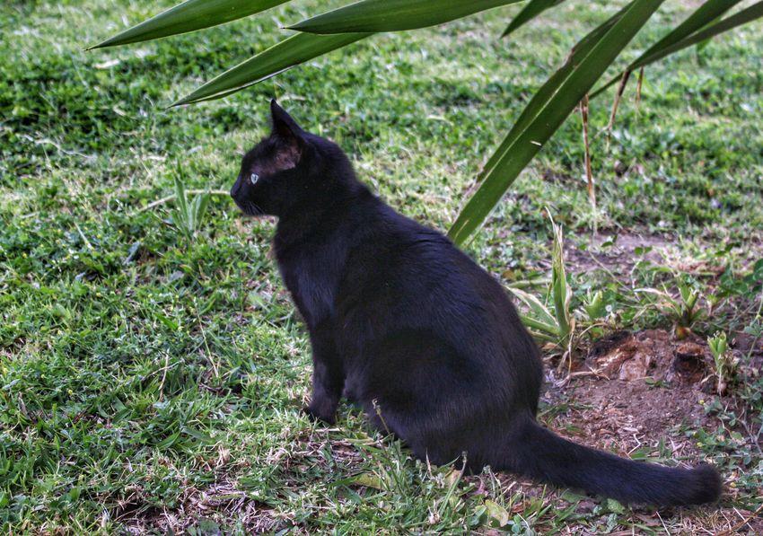 I ❤ Cat  Black Cat Black Cats Black Cat Is Just So Beautiful. Black Cat <3 Keeping Watch Cat Keeping Watch Black Cat Keeping Watch Cat Lovers Cat Watching Watching Cat Black Cat Watching On The Lookout Cat Eyes