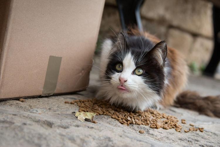 Close-Up Of A Funny Cat