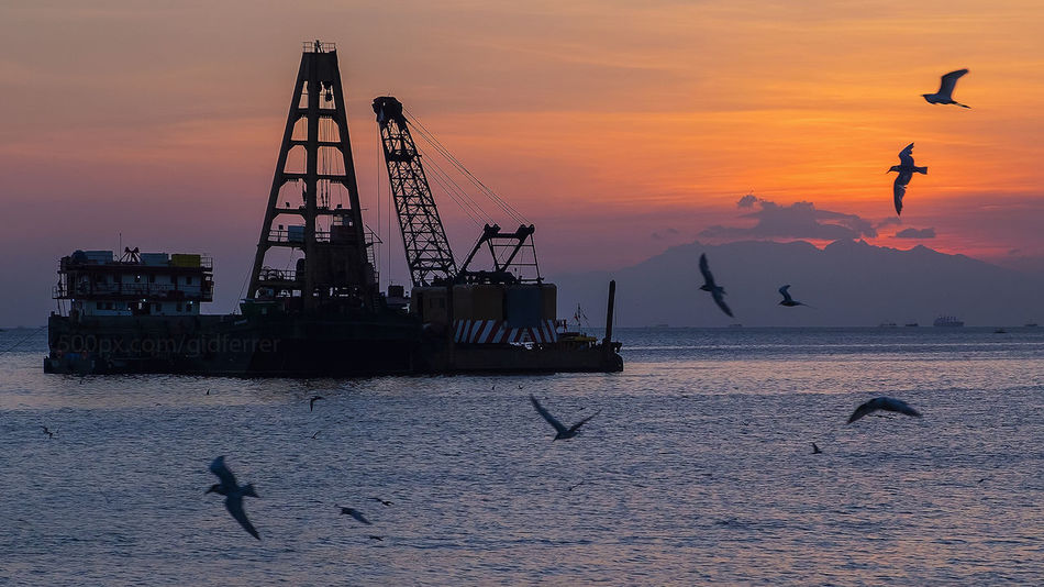 Animal Themes Animal Wildlife Beauty In Nature Bird Day Drilling Rig Flying FUJIFILM X-T2 Gidferrer Large Group Of Animals Mammal Manilabaysunset Nature No People Offshore Platform Oil Pump Outdoors Philippines Sea Silhouette Sky Spread Wings Sunset Water Waterfront