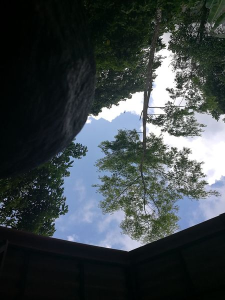 Tree No People Sky Nature Low Angle View Growth Outdoors Beauty In Nature Close-up Upside Down Photography Upside Down Ocassionalfun