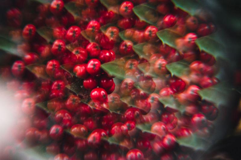 Full frame shot of red berries