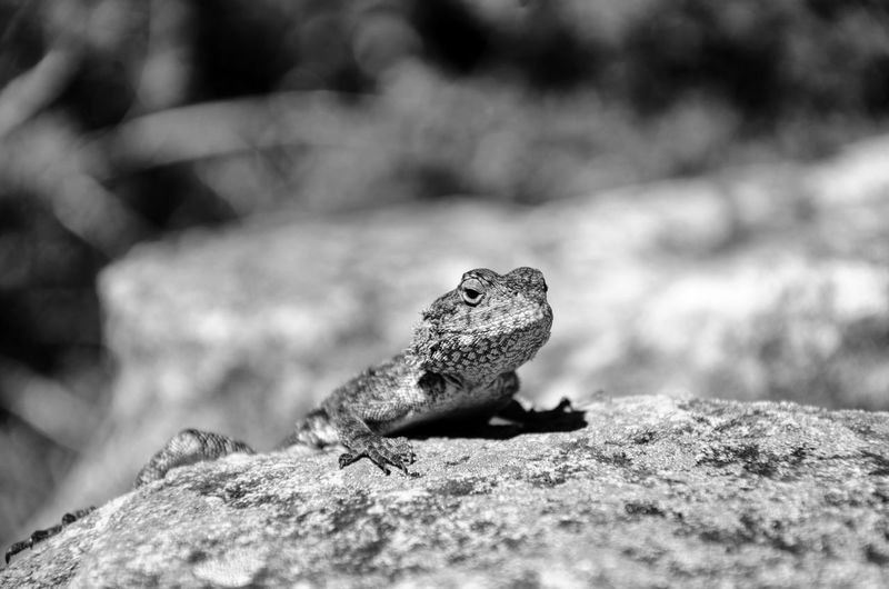 Only a lizard can look this relaxed. Animal Wildlife One Animal Reptile Animals In The Wild Lizard Animal Themes Animal Close-up