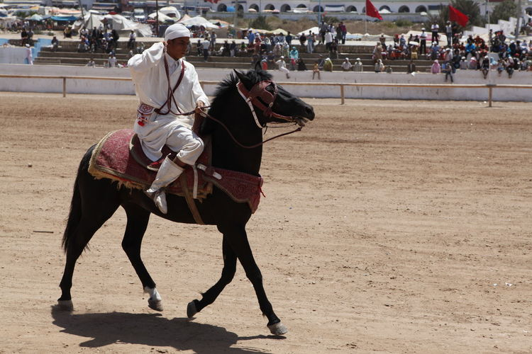 Africa Black Casablanca Competition Domestic Animals Gun Horse Marrocos Moroccan Horses One Animal Outdoors Sand The Charge Of The Berbères Tradicional