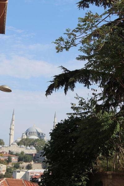 Süleymaniyecamii Tree Arts Culture And Entertainment Sky Amusement Park Day No People Outdoors Nature City EyeEm Nature Photography EyeEm EyeEm Gallery Eyeemphotography Canon 1300d EyeEm EyeEm Gallery Historyphotography