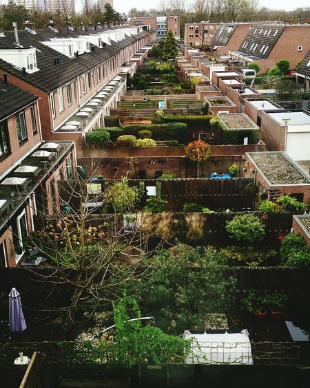 Gardens Dutch Design Dutch Landscapes a row of Backyard Gardens Typical for dutch cities Alphen Aan Den Rijn Netherlands (c) Shangita Bose 2015 All Rights Reserved. The Street Photographer - 2016 EyeEm Awards The Architect - 2016 EyeEm Awards Nature's Diversities Urban Geometry