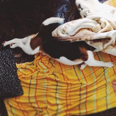 Неподкупный будильник Morning Beagle Vscocam