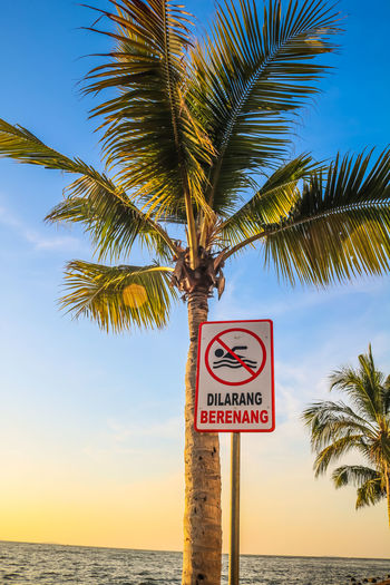 Information sign by palm trees at beach against sky