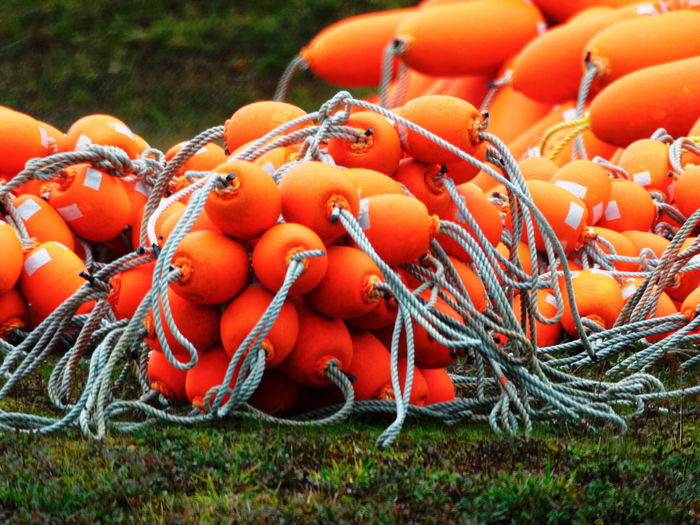 Fishing floats in Westport, WA Grass New Orange Rope Commercial Fishing Crabbing Fishing Fishing Gear Floats Fresh Grass No People Orange Color Outdoors