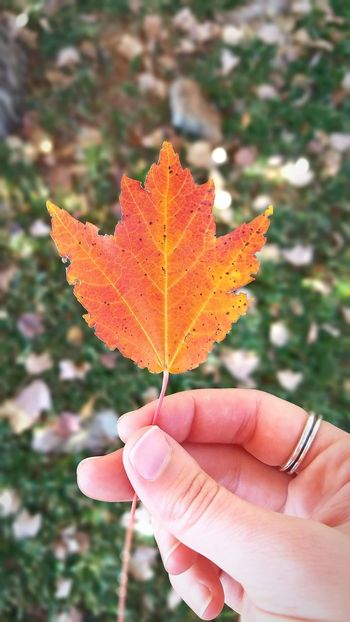 Leaf Autumn Maple Leaf Change Close-up Focus On Foreground Nature Outdoors Day Maple No People Nature Photography Artsy Naturephotography Orange Red Fall