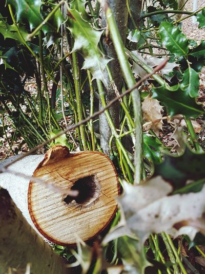 outside Tree Stump Day Tooday.! Browse Em Selects EyeEm Selects Water Close-up Plant