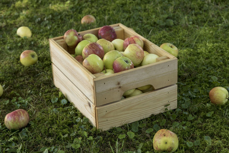crate of fresh ripe apples in garden on green grass Apfelernte Streuobstwiese Apple Apple - Fruit Basket Box Box - Container Container Crate Day Field Food Freshness Fruit Grass Green Color Healthy Eating Land Nature No People Outdoors Plant Ripe Wellbeing Wood - Material