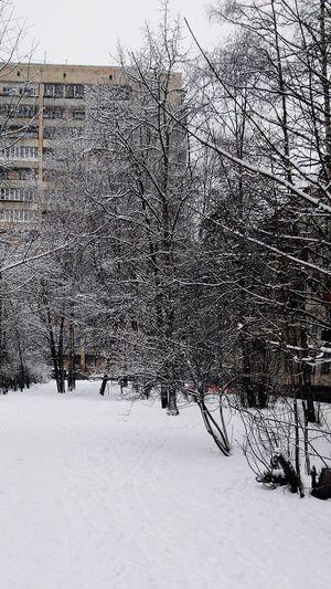 Winter Fantastic White Gourgeous Saint-Petersburg Winter Trees