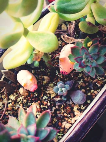I like the peaceful little world🍀 Enjoing Life Lovely DIY Nature Plants Funny Succulent Plant