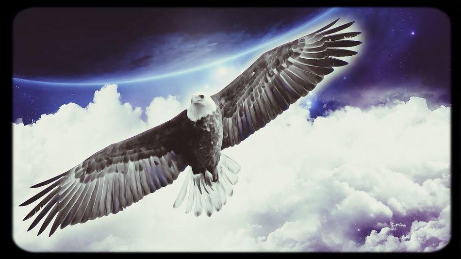 Photoshop Eagle Blue Space