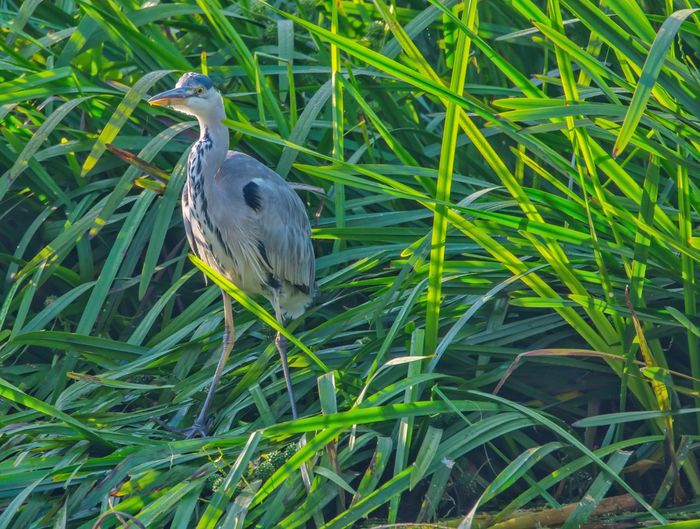 Bird perching on grass