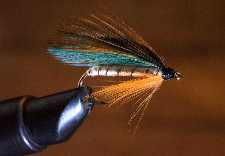 Close-up of fishing bait
