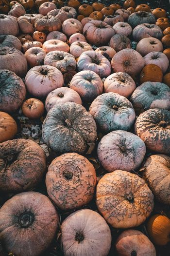 Pumpkins Thanksgiving Harvest Field Pumpkin EyeEm Selects Full Frame Large Group Of Objects Backgrounds Abundance Food And Drink Healthy Eating Food Fruit Sunlight Nature Outdoors