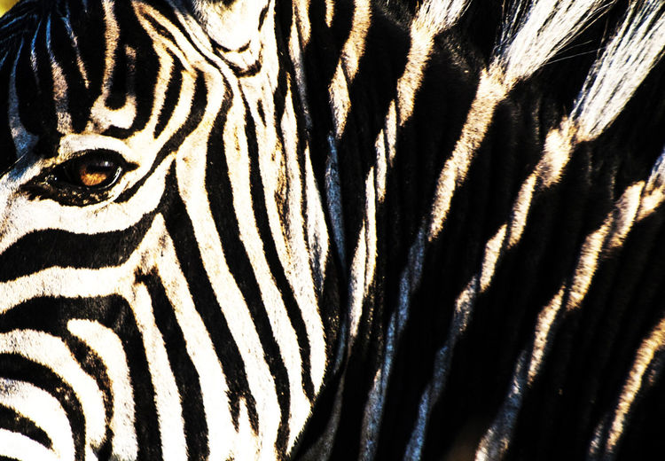 Full frame shot of a zebra