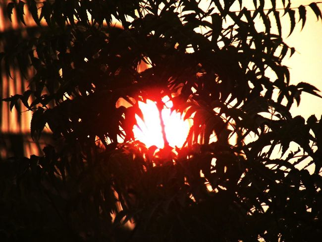 Sun Sunset Sunset_collection Neem Leaves Bright Colours Red Orange Hues Nature_collection Mother Nature Diversities Of Nature Brautifull Sky