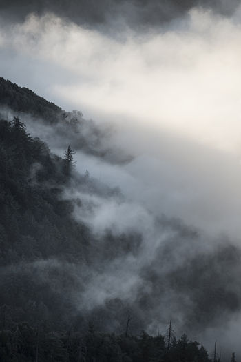 Beauty In Nature Cloud - Sky Day Fog Hazy  Landscape Mist Mountain Nature No People Outdoors Scenics Sky Tranquil Scene Tranquility Tree California Dreamin