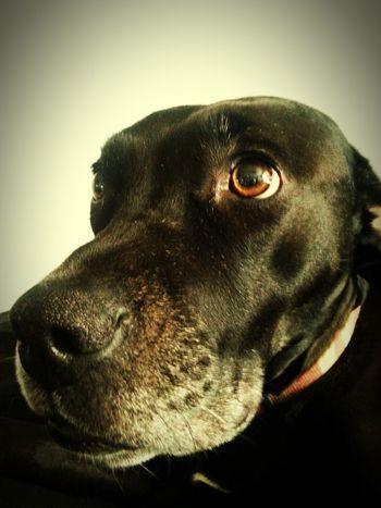 Smart Simplicity Pet Photography  Dog Aneye4theshot Petselfie