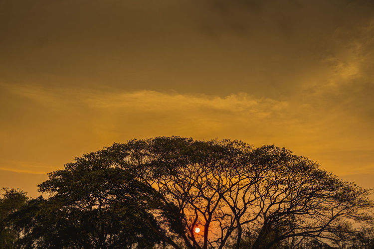 Low angle view of silhouette tree against romantic sky at sunset