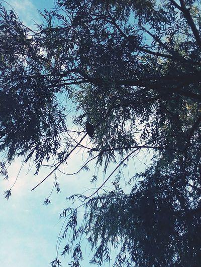 Bird On The Tree First Eyeem Photo