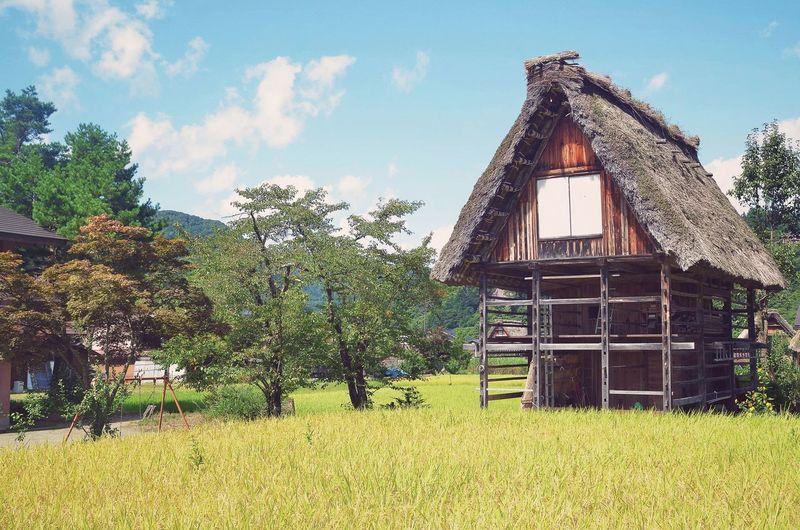Shirakawago Japan Japan Photography Outdoors Outdoor Photography Nature Nature_collection Nature Photography Green Town Village House Cabin