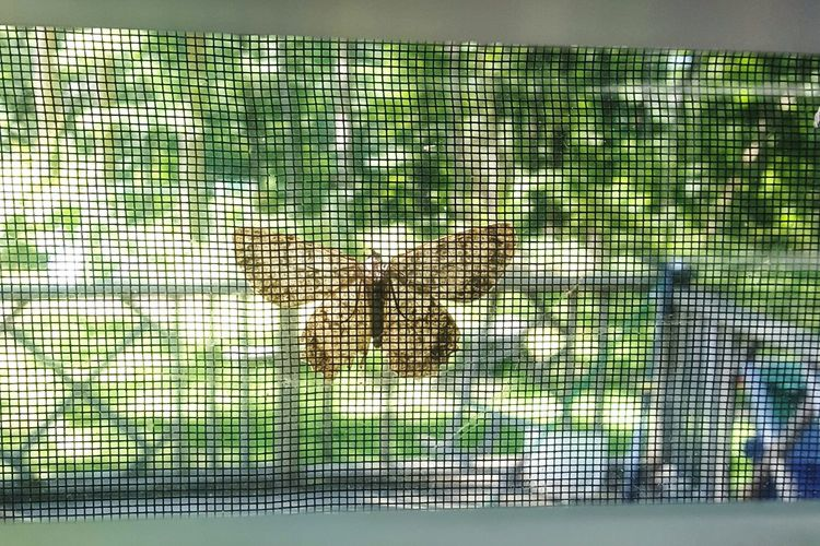 Moth Nature Nature Photography Jehovahscreation