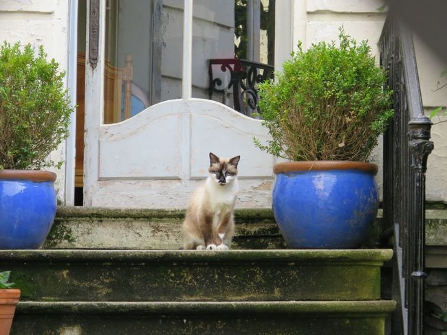 Cats Domestic Cat Stray Cat Sitting One Animal Cat Lovers Cats Of EyeEm at Paris, France