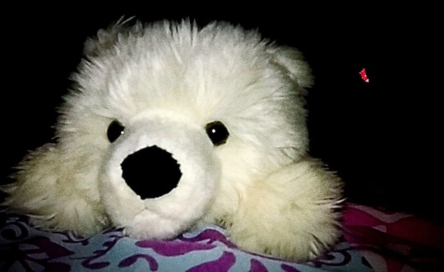 This is my stuffed bear Surta. Stuffedanimal ItsSurta ItsNiko
