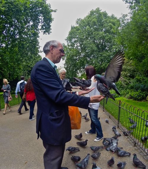 Animals In The Wild Carefree Escapism Friendship Fun Lunch Time! Pigeon Side View St James Park London  The Moment - 2015 EyeEm Awards Togetherness Eyeeminstagram