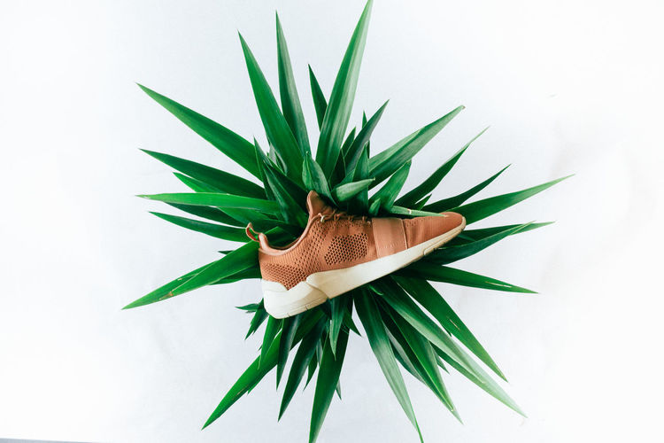 A brown athletic running shoes on a white background with a green plant in the middle Athletic Shoes Athletic Shoes, Green Color Indoors  Instagram Shoes Nature No People Running Shoes Shoes Of The Day Sports Shoes Studio Shot Tan Shoes, Tennis Shoes White Background First Eyeem Photo