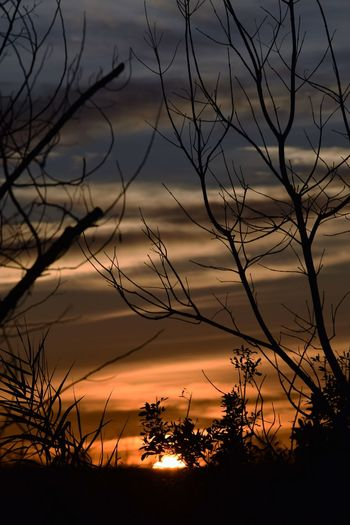 Dramatic Sky EyeEm Nature Lover Sun Going Down Beauty In Nature Cloud - Sky Evening Sky Plant Scenics Silhouette Sunset Tree