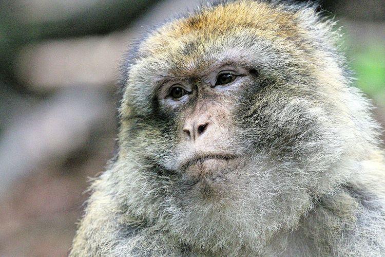 Monkey Animsls