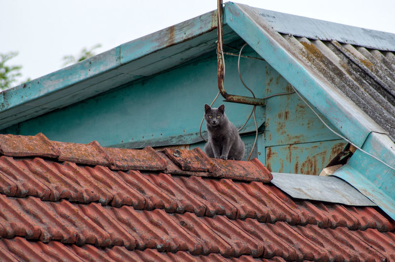 Low angle view of a cat on roof